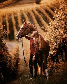 Tabitha Roth Photography tabitharoth photography Tabitha Roth Photography tabitharoth photography - Art Of Equitation Cute Horses, Pretty Horses, Horse Love, Beautiful Horses, Horse Senior Pictures, Pictures With Horses, Horse Photos, Horse Girl Photography, Equine Photography