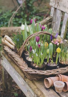 outdoor garden earthy, comfortable, used, lived in, and beautiful.. I love the early Spring tulips in the basket! A favorite flower of mine..