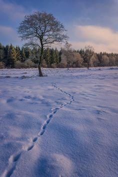The Trail to the Tree - {Nederlands/Dutch} Mezelf belonend met een dagje sneeuw in de Ardennen kwam ik langs deze scene. Ik geen idee wat het spoor gemaakt heeft maar ik gok een hert. Ik vind het leuk hoe het spoor je blik naar de boom leid waarna je het zachte licht op de bomen in de achtergrond waarneemt.{English/Engels} Awarding myself with a snow day in the Ardennes, I came upon this scene. I have no idea what made the trail, but I'm guessing a deer. I like how the trails pulls the eye…