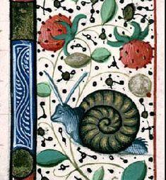 """#Escargot peint dans les marges du """"Missel à l'usage de Rodez"""", #manuscrit de 1479. Symbole lunaire, cet #animal indique la régénération périodique : en sortant et retractant ses antennes, l'escargot comme la lune apparaît et disparaît traduisant le thème de la mort et de la renaissance, une sorte d'éternel retour #enluminure #numelyo #bestiaire Marie Madeleine, Lyon, Comme, Renaissance, Painting, Snail, Illuminated Manuscript, Death, Animaux"""