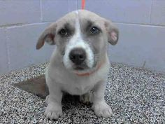 Impossibly cute, puppy needs a home Pet Adoption, Animal Adoption, Animal Rescue, Animal Shelter, Animal Control, Humane Society, Dog Love, Fur Babies, Dogs And Puppies