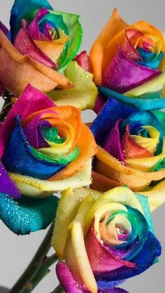 Are these for real?  Rainbow roses!      Yes, they are!  My husband bought these for me for my birthday!