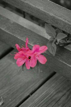 Flower  ᘡℓvᘠ❉ღϠ₡ღ✻↞❁✦彡●⊱❊⊰✦❁ ڿڰۣ❁ ℓα-ℓα-ℓα вσηηє νιє ♡༺✿༻♡·✳︎· ❀‿ ❀ ·✳︎· SUN OCT 9, 2016 ✨ gυяυ ✤ॐ ✧⚜✧ ❦♥⭐♢∘❃♦♡❊ нανє α ηι¢є ∂αу ❊ღ༺✿༻✨♥♫ ~*~ ♪ ♥✫❁✦⊱❊⊰●彡✦❁↠ ஜℓvஜ
