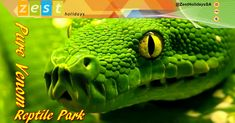 Add some excitement and adventure to your next holiday! Pencil in a visit to the world renowned Pure Venom Reptile Park. Reptile Park, Local Attractions, Adventure Activities, Next Holiday, Venom, Reptiles, Pencil, Pure Products, Holidays