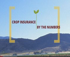"#Crop Insurance By The Numbers - ""Over the last decade, overall taxpayer spending on farm policy as a whole has steadily declined,"" notes Tom Zacharias, president of National Crop Insurance Services.  ""That's no accident,"" he adds, explaining that commodity prices have strengthened and the country began shifting to an insurance system that reduced the need for traditional subsides and limited taxpayer exposure."