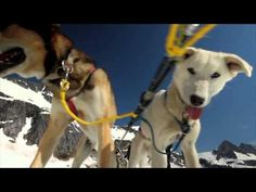 Juneau Dog Sledding Tour with Blue Kennels and Coastal Helicopters | Juneau, AK
