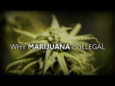 JOE ROGAN: WHY MARIJUANA IS ILLEGAL. Short, to-the-point, and spot-on analysis with a sense of humor.