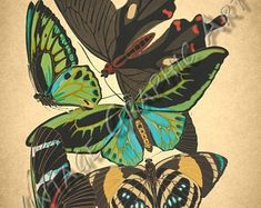 Motyle przez Seguy clip art Vintage Digital Download | Etsy Image Shows, Printable Wall Art, Background Images, Wall Art Prints, Plant Leaves, Card Making, Clip Art, Digital, Illustration