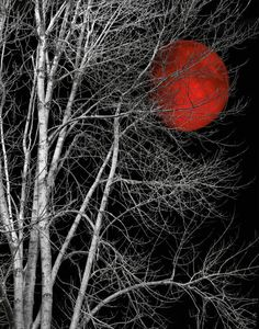 Black White Tree Red Moon Wall Art by LittlePiePhotoArt on Etsy