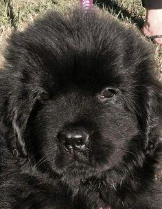 Cutest face ever!