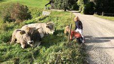 Natur und Tiere bewundern, die Aussicht geniessen und ganz nebenbei zum höchsten Punkt des Hörnli wandern – der Familienberg im Kanton Zürich. Kanton, Animals, Fall Weather, Hiking With Kids, Full Stop, Mountains, Nature, Animales, Animaux