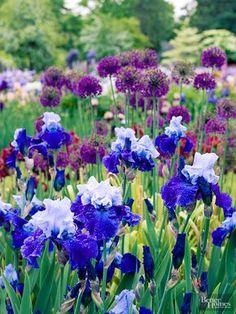 Garden to admire