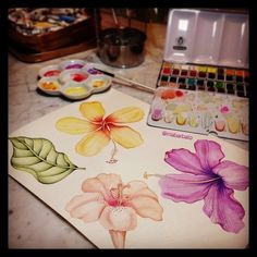 Watercolor by Marina Barbato