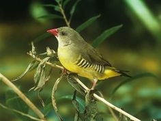 Attiveri Bird Sanctuary - in Karnataka, India