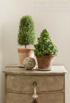 Tone on Tone - topiary-rosemary and ivy
