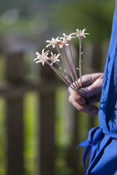 South Tyrolean farmers are creating beautiful hand crafts. These wooden edelweiss will never wilt! Hand Crafts, Red Rooster, South Tyrol, Farm Stand, Beautiful Hands, Farmers, Dandelion, Cottage, Country