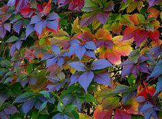 autumn colors | Victoria travel | Flickr