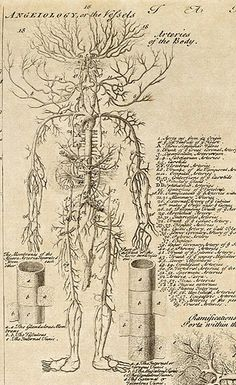 I just discovered this wonderful anatomical chart (see above) from volume one of Ephraim Chambers' Cyclopaedia, published in A . Medical Drawings, Medical Art, Human Anatomy Art, Anatomy Drawing, Arte Com Grey's Anatomy, Collage Mural, Wall Prints, Poster Prints, Foto Poster