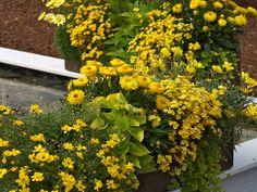 Balkon und Terrasse mit gelben Balkonblumen gestalten.