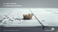 Agence Babel   Institut Pasteur Institut Pasteur, Ants, Curiosity, Awards, Advertising, Ant