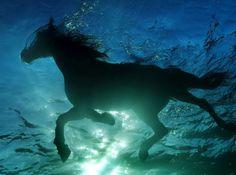 Swimming beauty