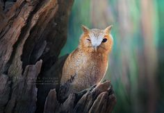 Photograph Love Owl by Sasi - smit on 500px