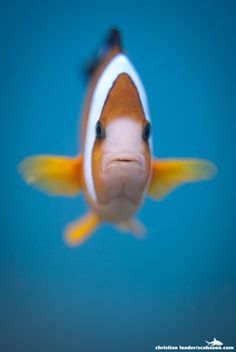 Nemo Portrait by Christian Loader / 500px