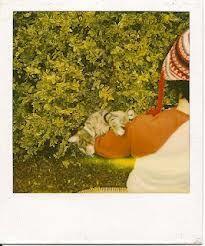andré kertész polaroids - Recherche Google