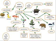 invertebrados - Bing images