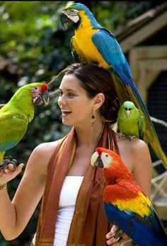 That is going too happen with me about a some years in the future. I'm going cazy parrot lady Beautiful Birds, Animals Beautiful, Beautiful Images, Dubai Nightlife, Animals And Pets, Cute Animals, San Francisco Art, Wood Painting Art, Bohemian Style Bedrooms