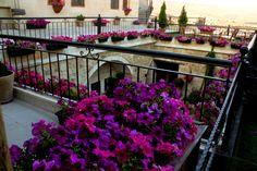 Çiçekli Avlu / Flowering Courtyard