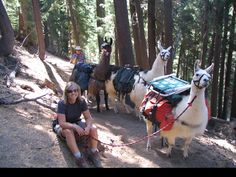 Central Oregon Llama Association:Hiking and Packing Central Oregon, Llamas, Trekking, Survival, Hiking, Outdoors, Camping, Activities, Adventure