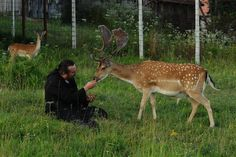 Monk hand feeding deer