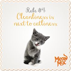 Rule #4: Cleanliness is next to catliness.