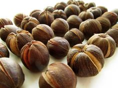 Hickory Nuts in Husks.  Rustic woodland decor. (No. 284)