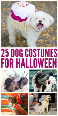 Looking for cute Halloween dog costumes? Check out these 25 dog costumes for Halloween here! http://www.budgetearth.com/25-dog-costumes-for-halloween/