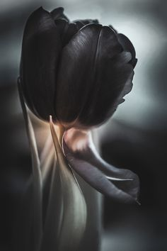 Abstract Tulip Tulips, Ballet Shoes, Acting, Gloves, Lens, Abstract, Pictures, Photography, Instagram