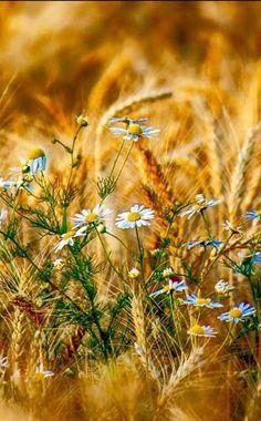 New Flowers Wild Nature Country Ideas Flowers Nature, Wild Flowers, Beautiful Flowers, Beautiful Pictures, Fresh Flowers, Flor Magnolia, Orquideas Cymbidium, Fields Of Gold, Wild Nature
