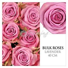 Buy fresh cut wholesale roses, for florists, corporate events and DIY brides. Discover top grade bulk natural, tinted or glittered roses and rose petals. Rose Petals Wedding, Wedding Bouquets, Wedding Flowers, Vintage Bridal Bouquet, Bulk Roses, Wholesale Roses, Rose Centerpieces, Lavender Roses, Simple Weddings