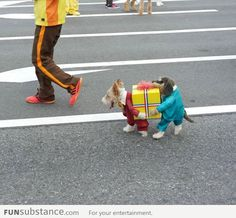 Best Halloween dog costume! Caring a box with a pal! #dogs #halloween #NYC