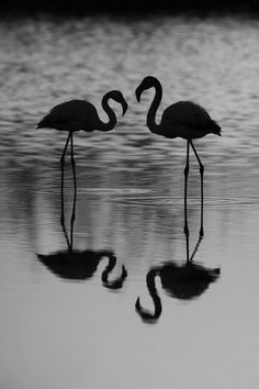 Black & White Photography - Reflection