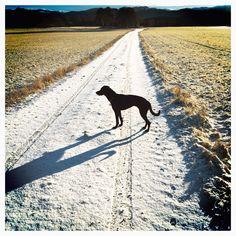 Februar 2014 endelig noen snøfjon . Jøa, Pointer blandingshund, tur, snø, vinter