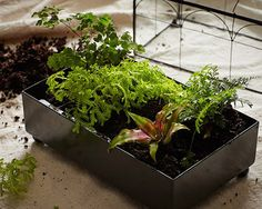 Create Your Own Closed Terrarium in 7 Easy Steps