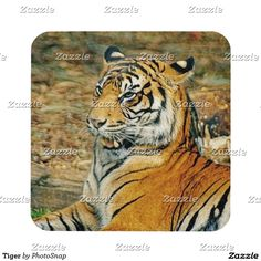 Tiger Beverage Coaster