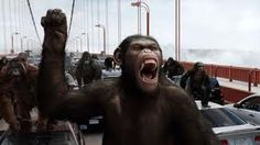 The Rise of the Planet of the Apes sequel is on its way. Fox chairman confirmed at CinemaCon that the film series will continue. Famous Movies, New Movies, Good Movies, Movies Free, Cult Movies, Movies Online, Dawn Of The Planet, Planet Of The Apes, Assassins Creed