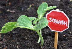 DIY Garden Markers: City Planning DIY Garden