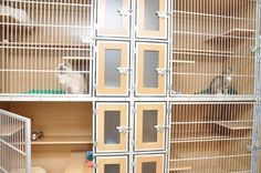 Cat Hotel units with cats.  Litter-box gates have frosted glass to let in light but give the cats privacy.
