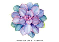 Succulent Watercolor Images Stock Photos & Vectors - Stock Photo - Ideas of Stock Photo Photo - succulent watercolor Images Stock Photos & Vectors Succulents Drawing, Watercolor Succulents, Watercolor Flowers, Succulents Painting, Watercolor Images, Watercolor Paintings, Watercolor Artists, Abstract Paintings, Oil Paintings