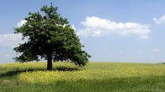 עצים תמונות - חיפוש ב-Google