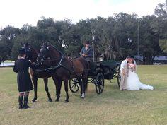 #wedding #carriage #romantic #florida #GrandOaksResort